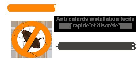 Anti cafards Bruxelles